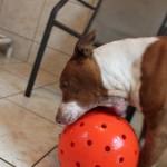 Rico-and-ball-2162012
