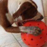 Rico-and-ball-foot02162012