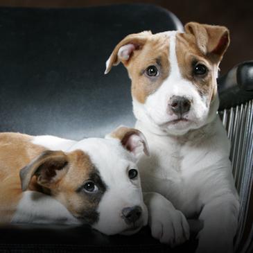 g4 pups